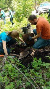 MSUFCU and ELPL volunteers plant trees at ELPL